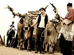 Il Settennale (f@brizio72) Tags: carro festa calabria bernardino crotone tradizioni ionio prete buoi nikond90 fabriziocarbone madonnadicapocolonna cantadini settennale laestagrande
