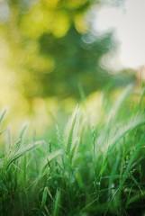 I  Summer (ingephotography) Tags: summer sun 3 green grass yellow 50mm gold golden groen dof heart bokeh zomer gras f18 geel gouden zon fifty  nifty goud niftyfifty