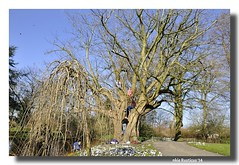 Koningin Wilhelmina Park (Ankie Rusticus, I'm not much here) Tags: nature spring natuur lente wilhelminapark sneek voorjaar koningin