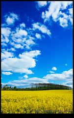 160428-7768-XM1.jpg (hopeless128) Tags: trees sky france clouds fields eurotrip fr rapeseed 2016 nanteuilenvalle aquitainelimousinpoitoucharentes aquitainelimousinpoitoucharen