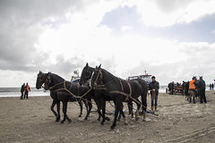 2016-Ameland039 (Trudy Lamers) Tags: wadden ameland eiland paarden reddingsboot reddingsactie
