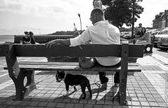 A l'ombre. (renphotographie) Tags: chien monochrome analog port noiretblanc leicam6 cancale kodaktmax streetdog lahoule renphotographie