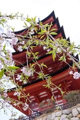 Itsukushima VI (Douguerreotype) Tags: pink red japan cherry temple pagoda shrine blossom buddhist hiroshima miyajima cherryblossom sakura vermilion