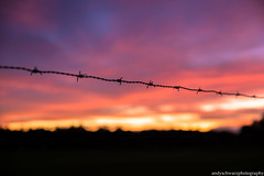 Barbed Wire Sunrise (andyschwarzphotography) Tags: sunrise nikon nikond750 australia melbourne colours tamron2470 fence barbedwire clouds