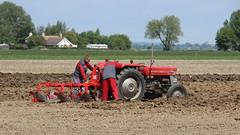 Adjusting the plough (Duck 1966) Tags: tractor plough ploughing masseyferguson carringtonrally