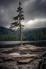 Arbersee (silkefoto) Tags: see wolken wald arber tanne felsen dster bayrischerwald arbersee