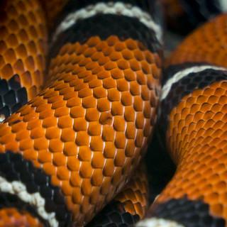 beauty of nature - snake skin - 5293