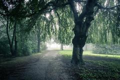 Fort tropicale (Gilderic Photography) Tags: mist nature wet forest canon belgium belgique belgie chartreuse liege foret arbre brouillard brume humide g7x gilderic