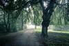 Forêt tropicale (Gilderic Photography) Tags: mist nature wet forest canon belgium belgique belgie chartreuse liege foret arbre brouillard brume humide g7x gilderic