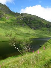 Rest And Be Thankful (tubblesnap) Tags: scotland scenery argyll be thankful and glencoe rest loch foxglove restandbethankful inverary arrochar bute lochgoilhead a83
