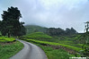 Sg Palas Tea Plantation (HDR) (2121studio) Tags: nature nikon ali malaysia indah cameronhighlands kuantan alam malaysianphotographer drali sgpalasteaplantation 2121studio kuantanphotographer pahangphotographer ciptaanallahswt 0139342121 nubleebinshamsubahar