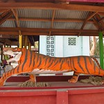 "Long Tiger is Long <a style=""margin-left:10px; font-size:0.8em;"" href=""http://www.flickr.com/photos/14315427@N00/7070412821/"" target=""_blank"">@flickr</a>"
