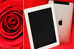 iPad 1&2 ( SUMAYAH  ) Tags: ca flower canon photography eos mac  ipad 550d sumayah