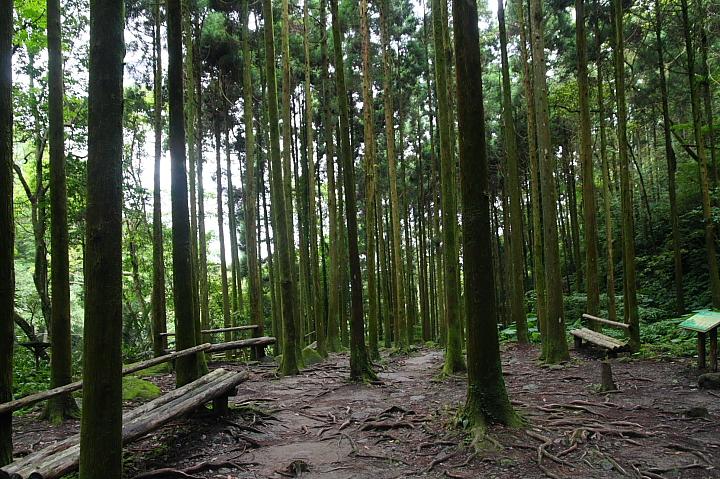 馬武督森林(綠光小學)030