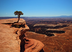 Brave lonely pine, Canyonlands NP, Utah (Robyn Hooz) Tags: blue sky self canon island eos great sigma canyon cielo canyonlands brave pino height steep isola orizzonte burrone islandinthesky 550d temerario 1020exhsm