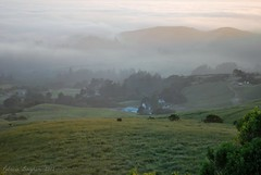 Pastoral California Coast (Aqua0646 (Pat)) Tags: california sunset fog landscape pastoral