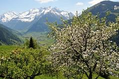 Rauris, im Pinzgau (Waidblicker) Tags: alps nature landscape austria nationalpark hohe rauris pinzgau hohetauern tauern wrth bucheben