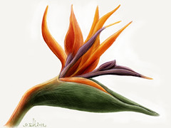 Bird of paradise flower #MadeWithPaper (WouterZArtZ - Dutch Designs!) Tags: red flower nature illustration sketch drawing digitalpainting birdofparadise tropical drawn ipad madewithpaper ipad2 paperapp paper53