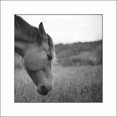 horse (ser_grao) Tags: film caballo nikon kodak tmax 400 fm2 redfilter filtrorojo analogico
