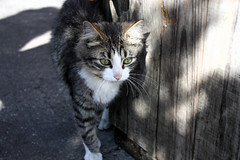 (SofiDofi) Tags: street usa newyork cute cat outdoors furry feline lowereastside kitty april traveling spring2012 outsideafishfactory
