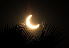 Annular Eclipse from Riverside, CA (Dave Toussaint (www.photographersnature.com)) Tags: california ca travel usa sun nature photoshop canon landscape eclipse photo interestingness interesting photographer riverside cs2 may picture explore socal adobe palmtree flare southerncalifornia 2012 adjust solor infocus annular thegalaxy denoise 60d topazlabs photographersnaturecom davetoussaint mygearandme ringexcellence