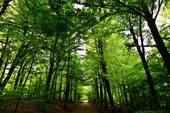 Beech forest (Mattias Lindgren) Tags: nikon random 1224mm nikond300
