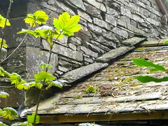 Detail, roof construction, Monk Coniston (wonky knee) Tags: uk lakedistrict cumbria monkconiston slate coniston hfholidays constructiondetail lakelandstone lakelandslate
