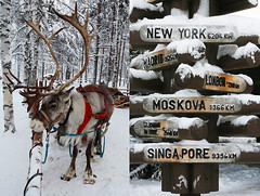 santa claus caribou - lapland (Emmanuel Catteau photography) Tags: santa christmas travel winter snow animal kids finland reindeer holidays europe photographer rovaniemi reporter deer national journey lapland planet lonely claus caribou geo geographic raindeer catteau wwwemmanuelcatteaucom