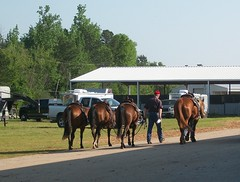 Four Horses (ETTPA_photos) Tags: horse texas trucks horsetrailers ruskcounty ettpa