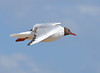 Gull (Ruth S Hart) Tags: uk summer motion bird beach sunshine flying seaside seagull flight essex southend roaring scavenger 2012 fbdg nikond5100