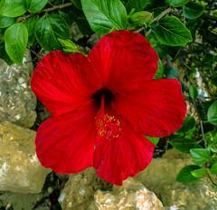 Flor roja Explorer (Nati Almao1) Tags: