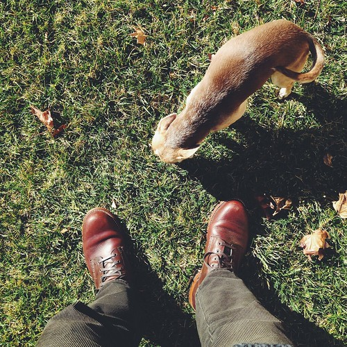 dogs grass square shoes boots jackson chihuahuas squareformat whereistand iphoneography wolverine1000mile vscocam uploaded:by=flickrmobile flickriosapp:filter=nofilter