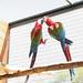 Bird Breeding and Research Centre