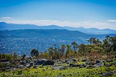 Kangaroos viewpoint - Explored
