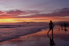 venice surfer at sunset (sjg310) Tags: california venice sunset people reflection nature silhouette clouds landscape la losangeles surfer venicebeach