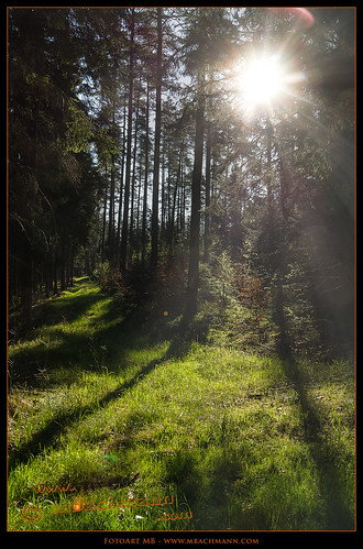 Walk in the forest
