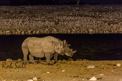 Nightly Visits by the Black Rhino, (robsall) Tags: africa camp vacation canon mammal hotel lodge rhino canon5d endangered namibia canoneos roomwithaview 70200 blackrhino blackrhinoceros 2015 criticallyendangered canon70200mm dicerosbicornis okaukuejo canon7020028 oshikoto okaukuejorestcamp okaukuejowaterhole canon5dmarkiii browserhinoceros 5dmarkiii 5dm3 canon70200mmf28isiiusm 5dmark3 okaukuejolodge 5dmiii browserhino canon5dm3 canoneos5dm3 robsallphotography etoshahotel okaukuejohotel