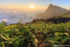 Sea of Clouds (Jakob Kolar) Tags: travel india mountain green nature clouds sunrise landscape asia tea outdoor kerala indien teaplantation southindia munnar scenicview