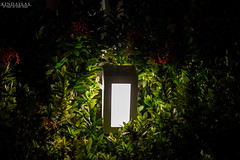 Natural Light (Kindallas) Tags: