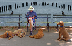 Texting Afternoon (jaland0ni) Tags: texting email dogs blackbirds ducks gulls water resting moment wastingtime waiting heat humid quiet silence man dogwalker park bench loner hudsonriver nyc chosenpeople