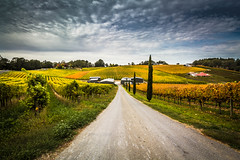 Blefari Wines at Carey Gully Vineyards (dmunro100) Tags: vines hills winery grapes adelaide wines