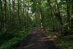 Sieben-Hgel-Steig (wuestenigel) Tags: summer green nature forest germany way de hessen path sommer natur wanderlust walkway grn bume darmstadt wandern frhling wochenende wanderweg glcklich odenwald rosenhhe dersiebenhuegelsteig