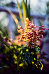 Flower (HeavenridgeFilms) Tags: flower color zeiss outdoors one colorful dof sony 55mm shallow f18 18 capture a7rii