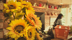 DSC03958 (Ngcson) Tags: monochrome pine sunflower lantern gloaming toyphotographer