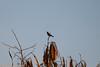 IMG_7249L4 (Sharad Medhavi) Tags: bird canoneod50d birdsandbeesoflakeshorehomes
