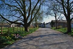 Brassey Green Hall, Cheshire 250312 - DSC_0018 (Leslie Platt) Tags: spring cheshire farm halftimbered straightened tarporley exposureadjusted brasseygreen cheshirewestchester