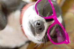 Pink Sunglasses (LanaScape Photos) Tags: pink color layers beyond celebrating kimklassen