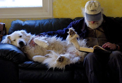 snuggle (Explore) (DQmountaingirl) Tags: dog explore greatpyrenees readingcompanion idontknowwhythisphotomadeexplore