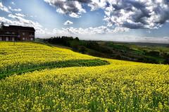 Collina gialla (є∂υαя∂) Tags: travel italia piemonte holliday coline monferrato scurzolengo visititaly