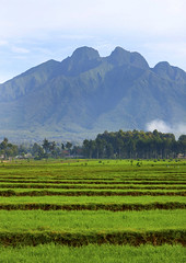 Sabyanyo - Rwanda (Eric Lafforgue) Tags: africa montagne landscape outdoors hill nopeople rwanda afrika paysage commonwealth afrique eastafrica centralafrica 9220 kinyarwanda ruanda afriquecentrale     republicofrwanda   ruandesa